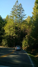 never ending drive to point reyes